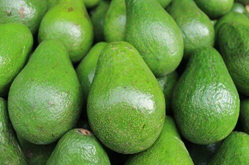 Avocados grown with recycled gypsum